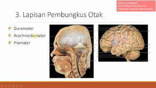 Video Anatomi Sistem Saraf #1 - Pelindung Otak download MP3, 3GP, MP4, WEBM, AVI, FLV Juli 2018