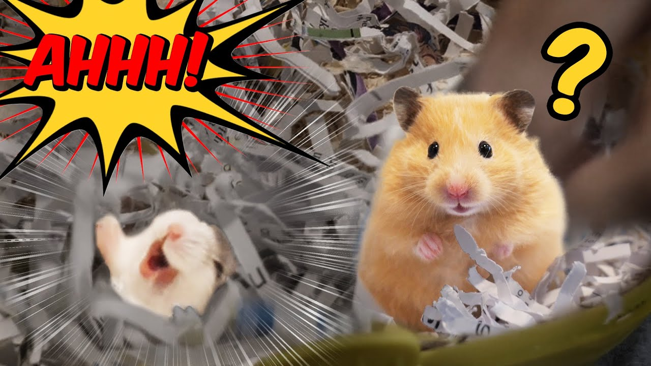 ALL My 8th Gen Hamsters | Two New Members
