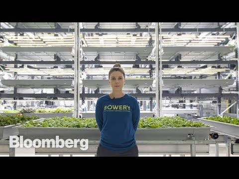 This High-Tech Farmer Grows Kale in a Factory