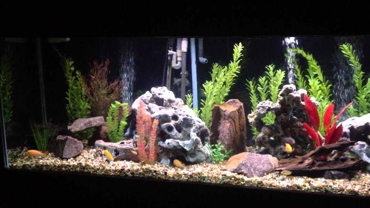 Freshwater fish for aquarium petsmart - Aquarium With Fake Rocks From Petsmart