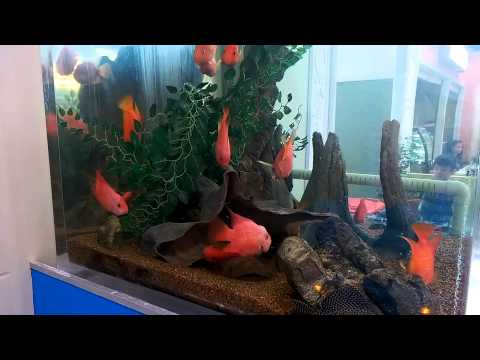 Blood Parrot Tank at Coventry Markets Morley