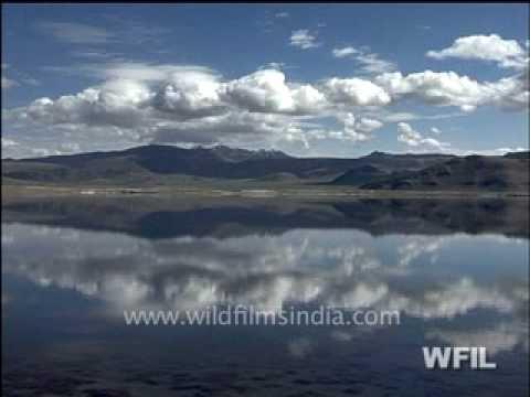 Wild India 24 hours                        Part 3