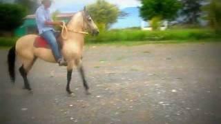 caballo de paso