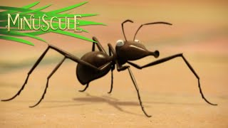 Minuscule - The Ants / Les Fourmis (Season 2)