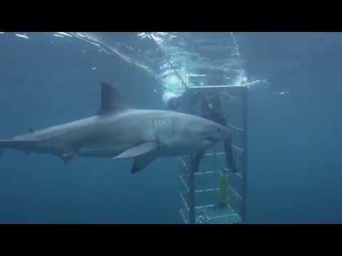 Shark Week -
