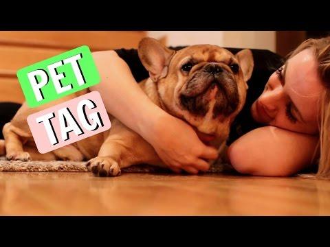 PET TAG - Francuski buldog