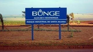 Safra 2011. Usina Bunge Agroindustrial Santa Juliana
