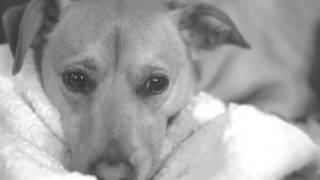 Видео фон для сайта - Собака | rowpost.com