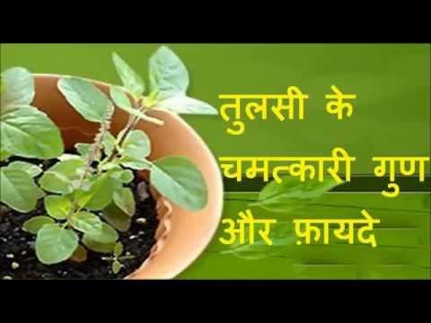 तुलसी के चमत्कारी गुण और फ़ायदे | Health Benefits of Tulsi (Indian Holy Basil)| Health tips in Hindi thumbnail
