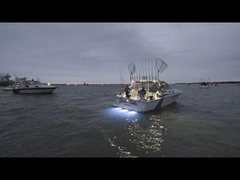 Lake Ontario Salmon Fishing - Spring King Of The Lake Tournament 2019