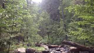 Little Grizzly Creek Plumas County California