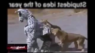 menyamar jadi zebra
