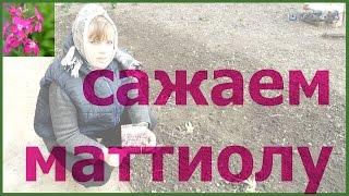 Садовая фиалка: видео-инструкция по выращиванию своими руками, особенности посадки, ухода, фото