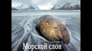 Они живут в воде (развивающее видео для детей)