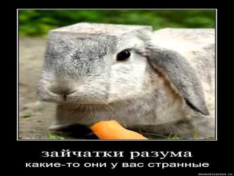 Картинки Демотиваторы Приколы 22596