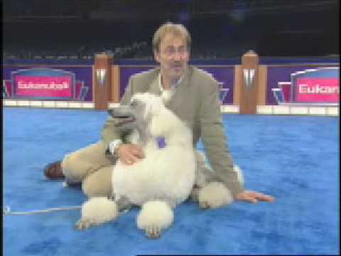 The Secrets of Dog Show Handlers