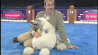 The Secrets of Dog Show Handlers