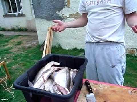 smoking haddock  fish