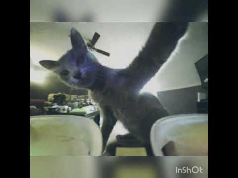 Cat Attack!