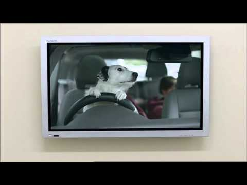 Dogs home tv ad every home needs a harvey youtube for Every dog needs a home