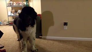 「はい、2つください。」クッキーをしっかり人間語でおねだりする犬発見