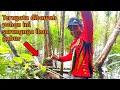 Mancing Ikan Gabus Snakehead Fishing On The Jungle Sebelum Dipancing Gabusnya Di Panggil Dulu  Mp3 - Mp4 Download