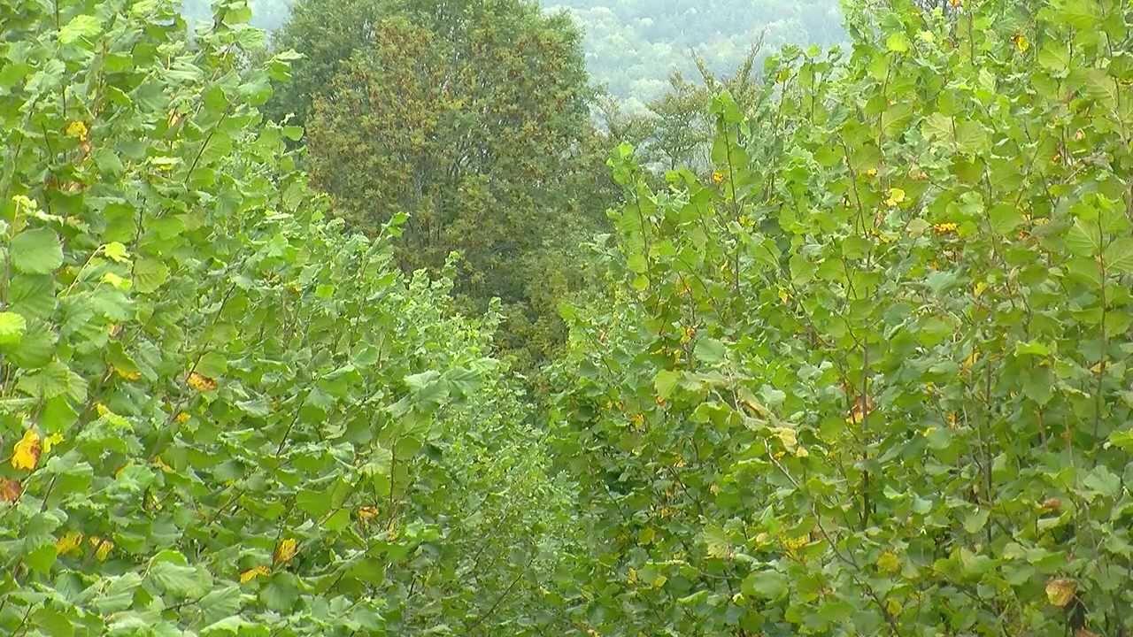 D ci tv comment trouver des truffes dans les hautes alpes youtube - Comment cuisiner les truffes noires ...