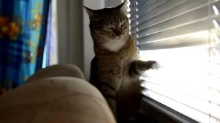Коты иногда такие смешные животные