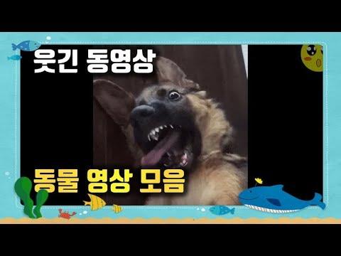 순간포착! 재미있는 동물 영상 모음! 웃긴 동영상 [ANIMAL VIDEO]