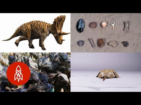Dig Into These Six Prehistoric Stories