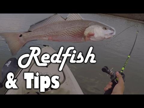 LOW Tide Redfish & Tips!