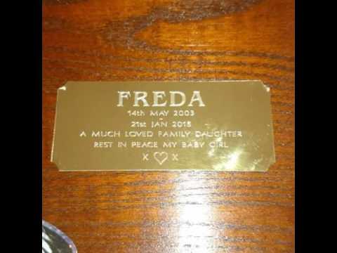 Freda 💕
