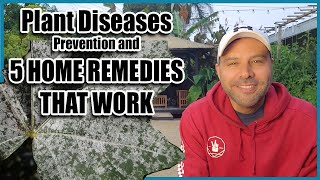 Plant Diseases - Prevention and 5 HOME REMEDIES that WORK!