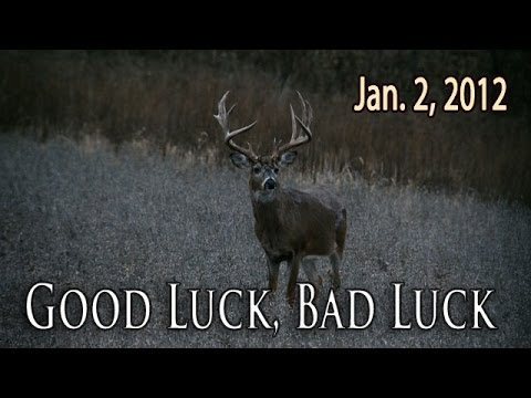 "Good Luck, Bad Luck -- Encounter with a 200"" Deer! 