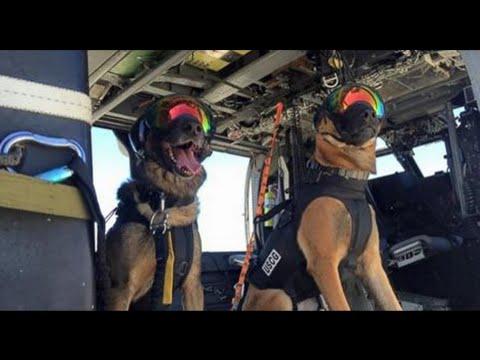 Dog in Coast Guard Finish Helicopter Training
