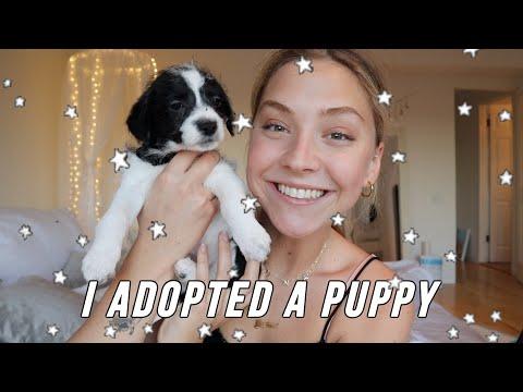 I adopted a puppy  meet Lucky Montana