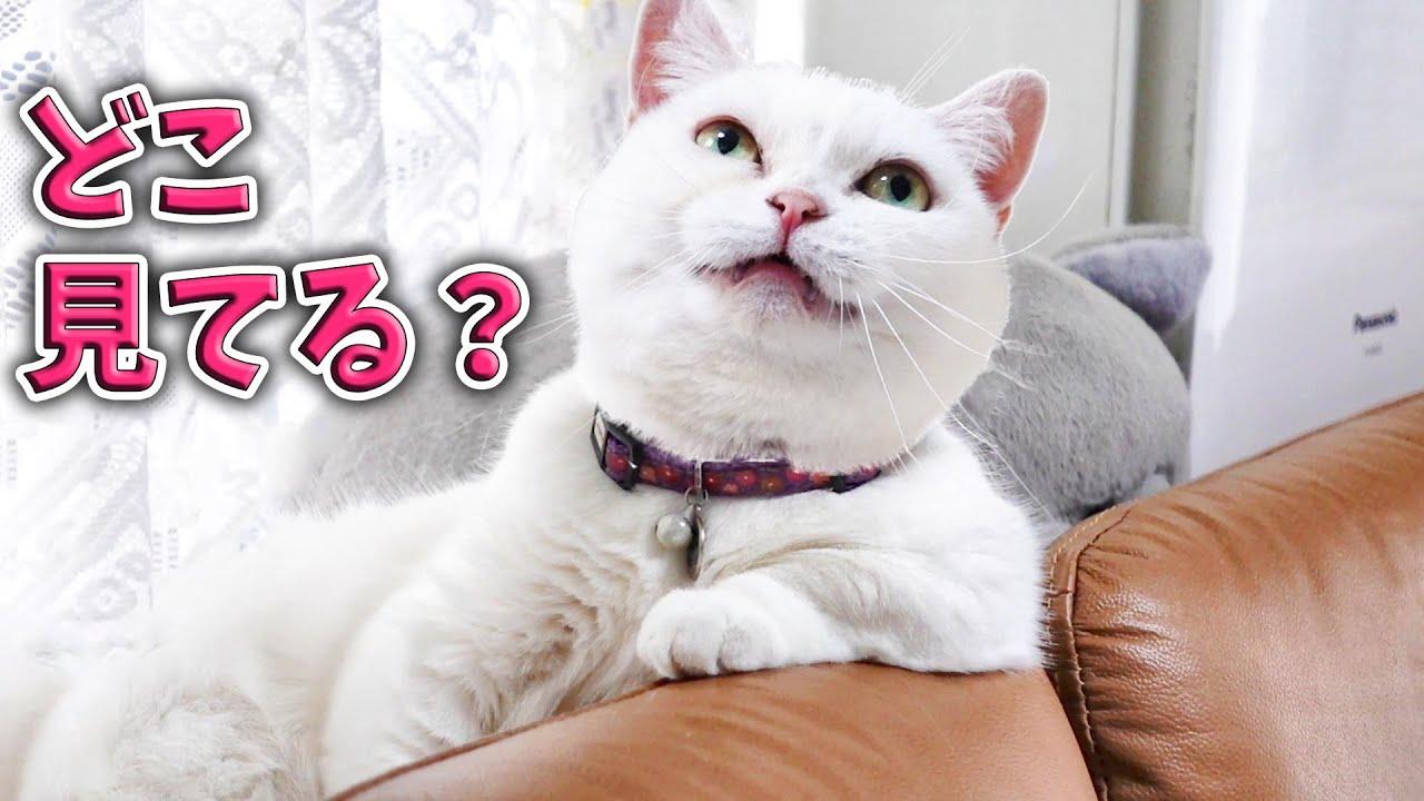 猫って、ときどき理解できない。 Sometimes I can't understand what cat thinking.