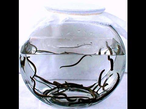 Антибактериальные · гепатопротекторы · гинекология · дерматология · жкт и печень · обезболивающие · офтальмология · против простуды.
