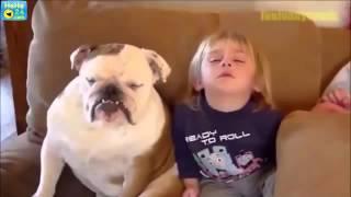 Śmieszne filmy ze zwierzętami