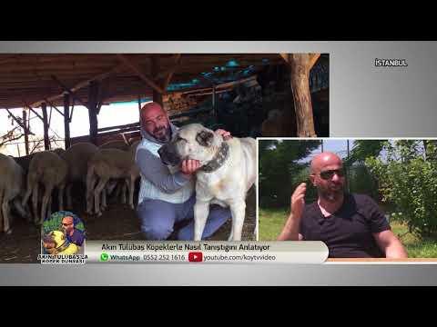 Akın Tülübaş İle Köpek Dünyası   02/07/2018