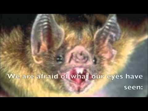 Commentary on the bat by roethke