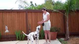 Devon's Dog Trick Training -  Nose Touch To Hand