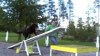 Ellie Learning The See Saw ~ Dog Agility