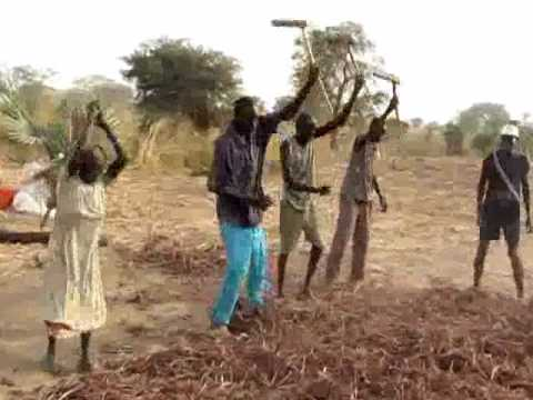 Threshing Sorghum Aweil Wmv Youtube