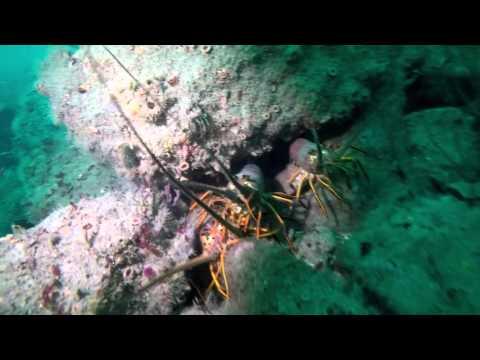 Toilet Bowl Reef Dive - Santa Monica Bay