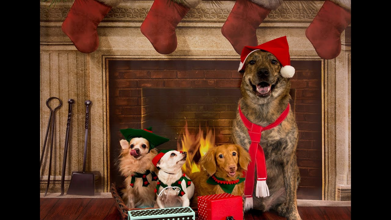 Dogs Christmas Photo shoot at C.S.Ling Photography - YouTube