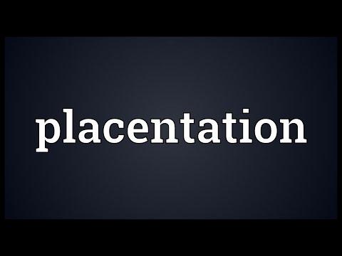 Header of placentation