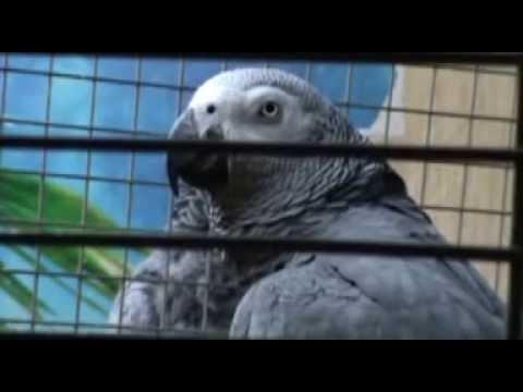 dieser Vogel hat einen Vogel