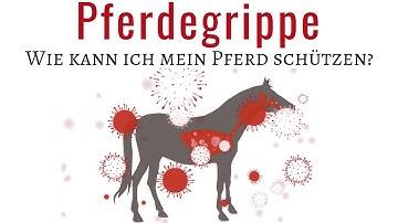 Influenza - Die Pferdegrippe 🤒 | Die notwendigsten Infos gibt es hier ☝🏼|Schütze dein Pferd!