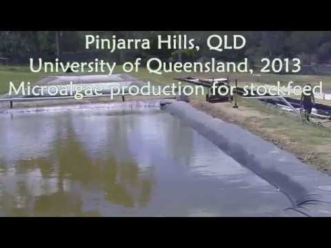 Microalgae Raceway Project - Pinjarra Hills - November 2013